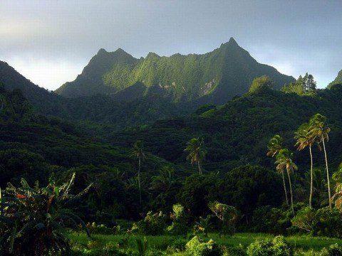 Cooköarnas jungel